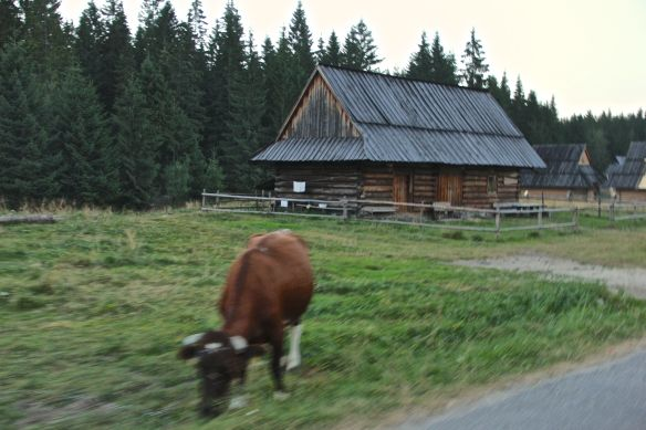 cattle house