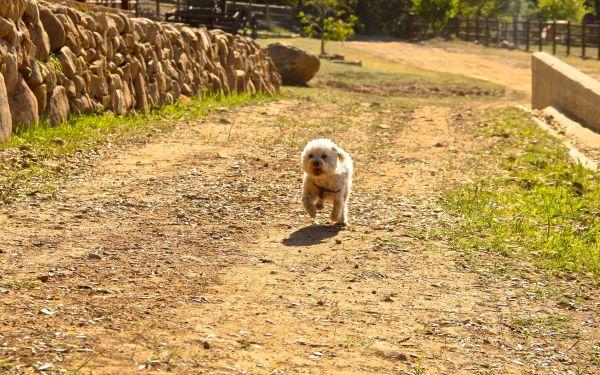 charlie running