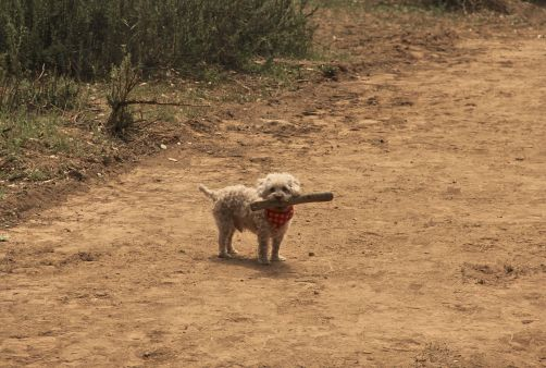 charlie stick