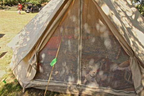 sachas tent