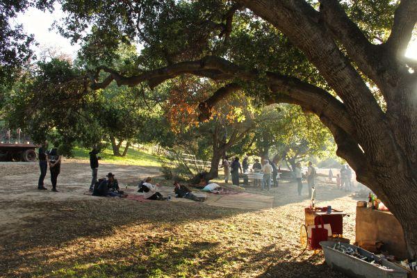 tree sun 2